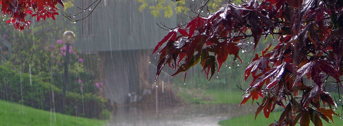 Monsoon Diseases and Prevention